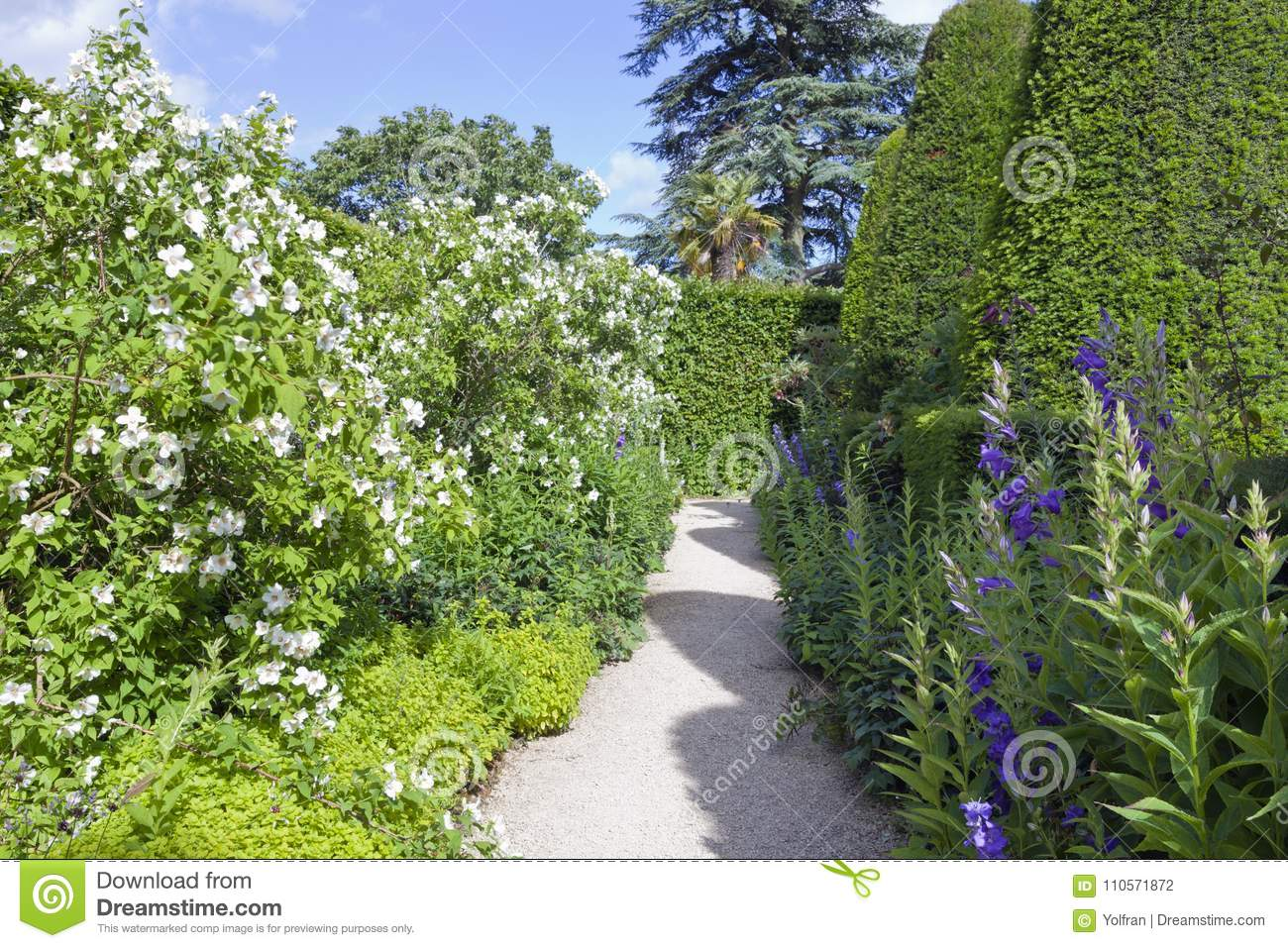 Lush Landscaped Garden With White Flowers Topiary Trees Stock Photo