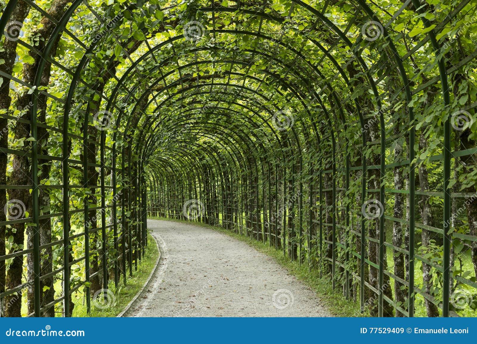 Garden pergola tunnel walkway in park.