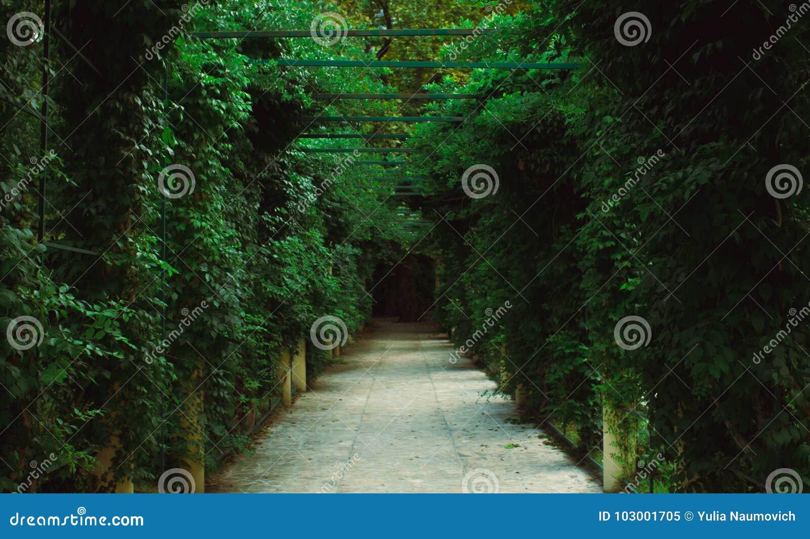 Garden pergola tunnel walkway in park