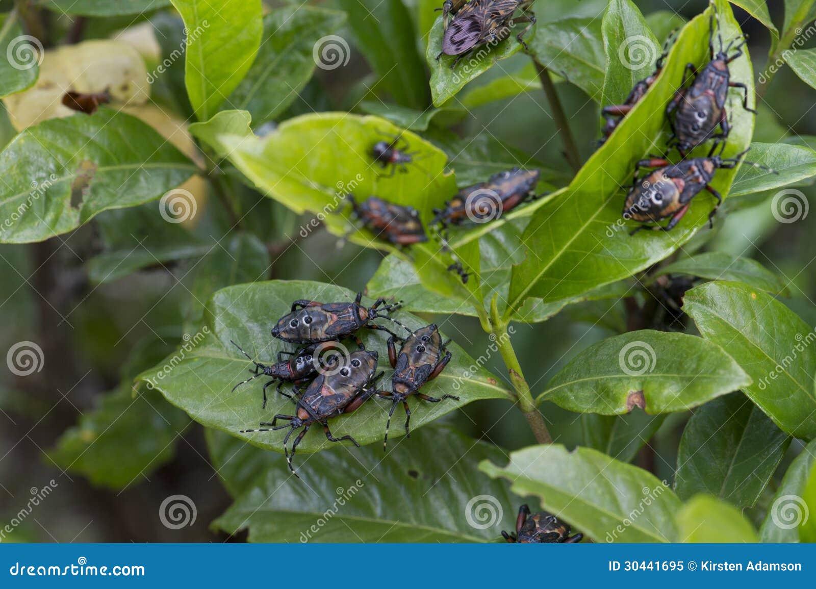 garden pests royalty free stock photo image 30441695