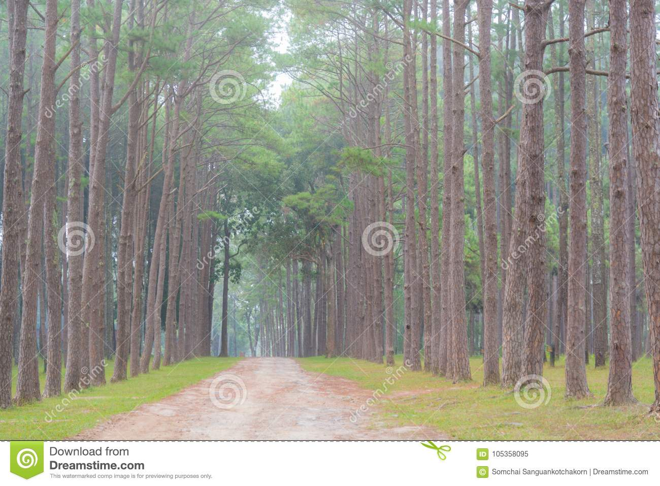 Garden of pine trees with foggy environment
