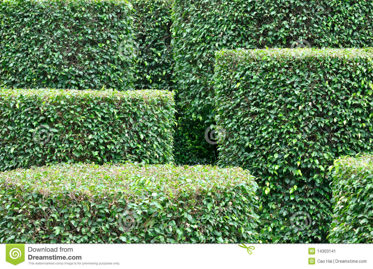 Garden plant pattern Stock Image. Shape And Pattern In Garden Plant Royalty Free Stock Photos
