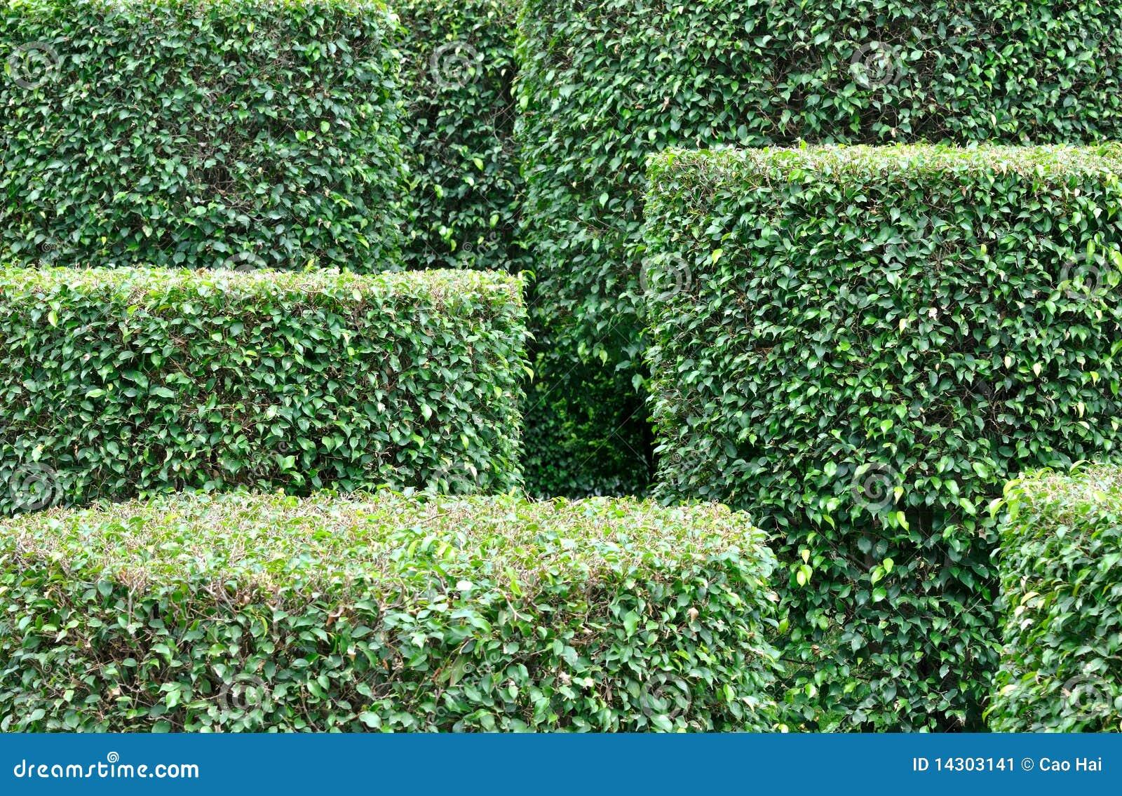 Plant Garden josaelcom