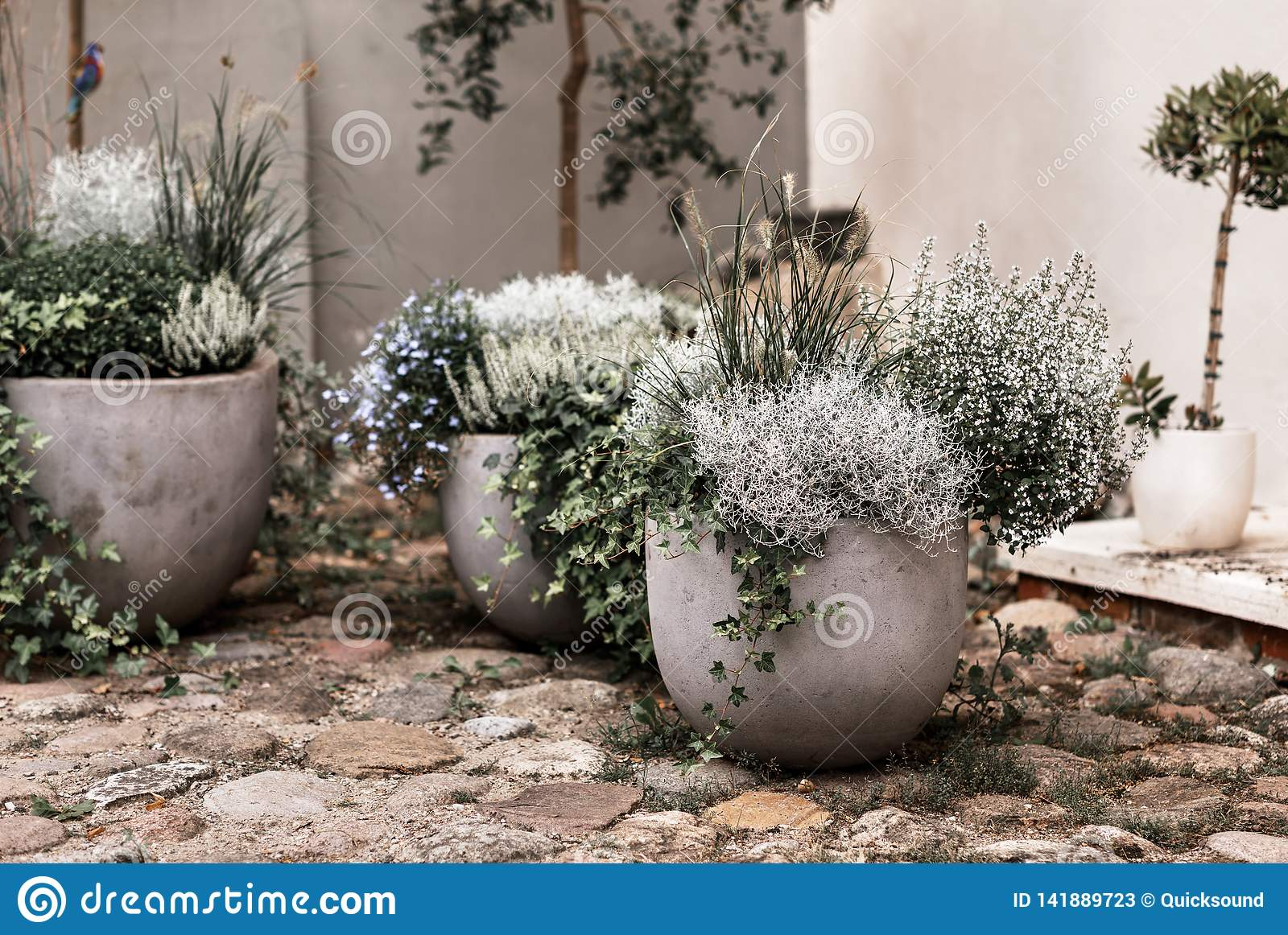 Garden Plants In Ceramic Pots Stock Image Image Of Plants Potted 141889723