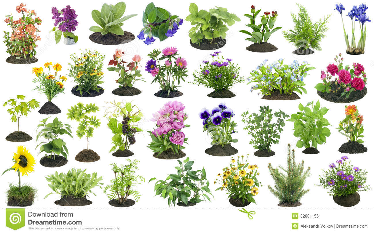 Garden plants grow in soil set stock photo image 32881156 for Garden trees types