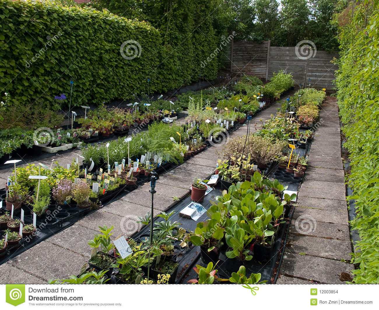 Nursery Garden Plants Royalty Free Photography Image 26955677 – Nursery Garden Plants