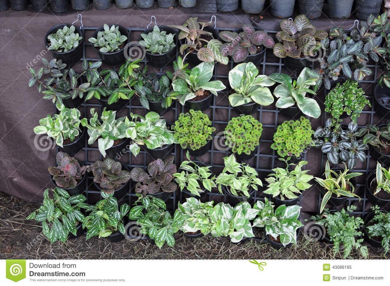 Garden plants for sale stock photo image 43086195 - Flowers planted may complete garden ...