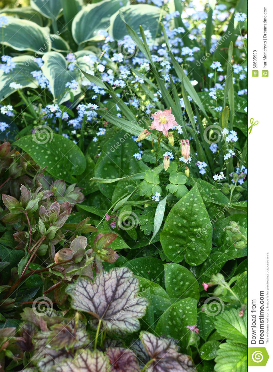 Garden plants stock photo image 60695998 for Different garden plants