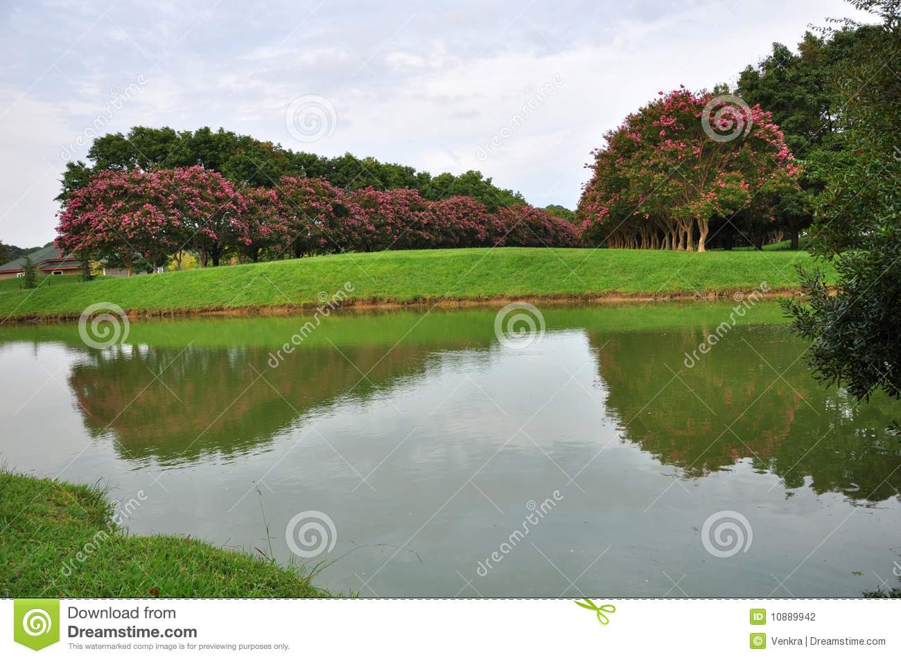 Garden pond stock photo image of tree picnic stagnation for Garden pond unlimited