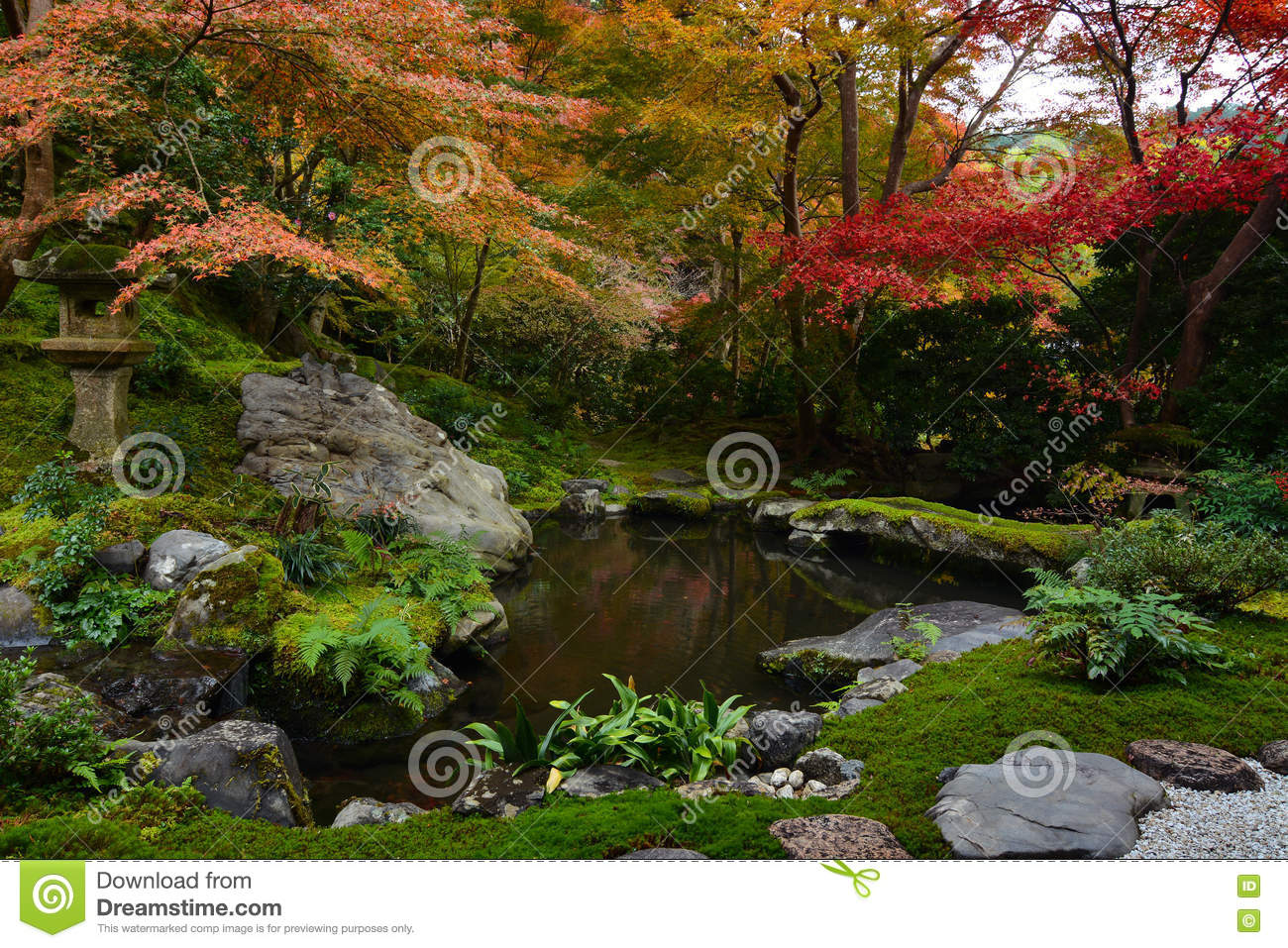 Garden Pond In Kyoto, Japan With Lush Green Moss And Red Fall Maple ...