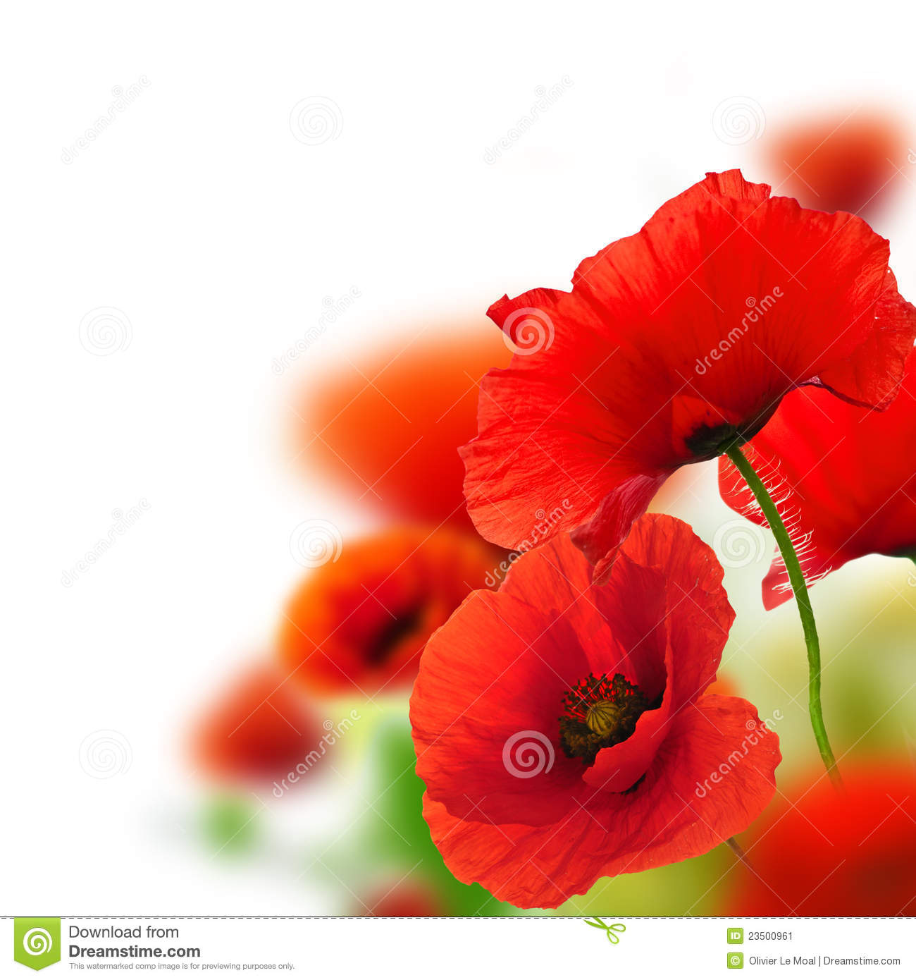 Garden Of Poppies Flower Background Stock Image Image Of