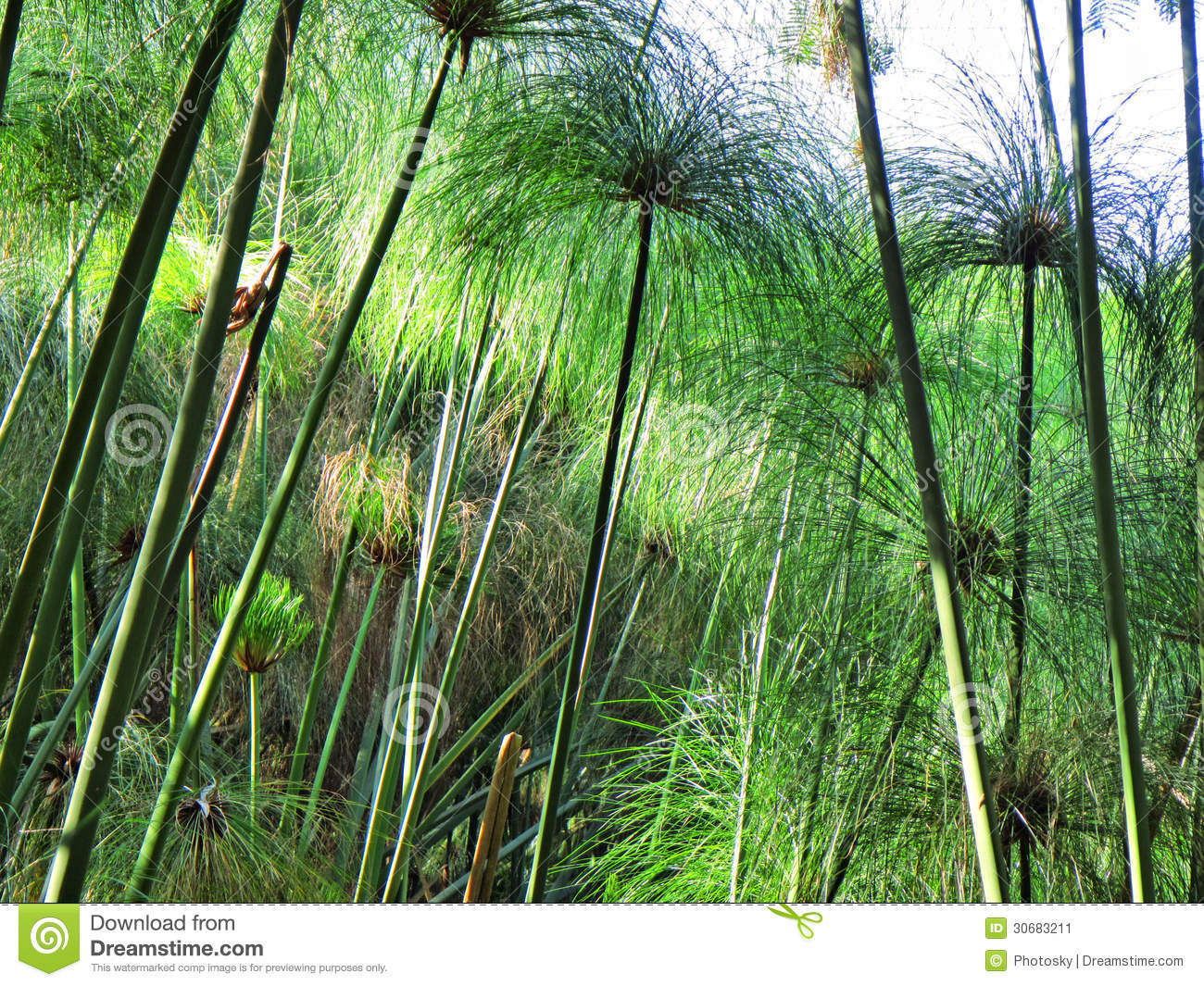 Garden reed like plants in sunset light stock image - Plantas de sol ...