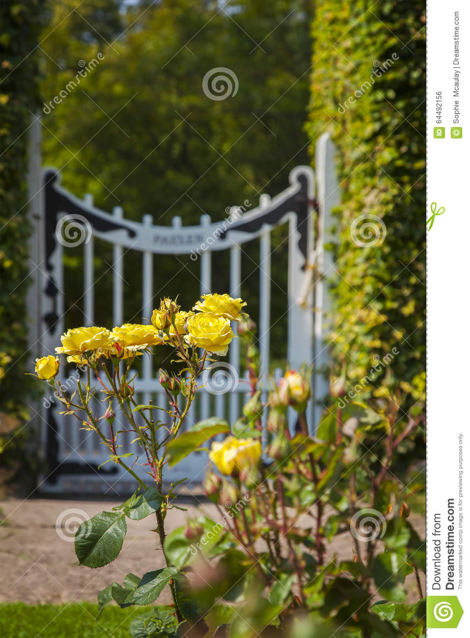 Garden roses and gate