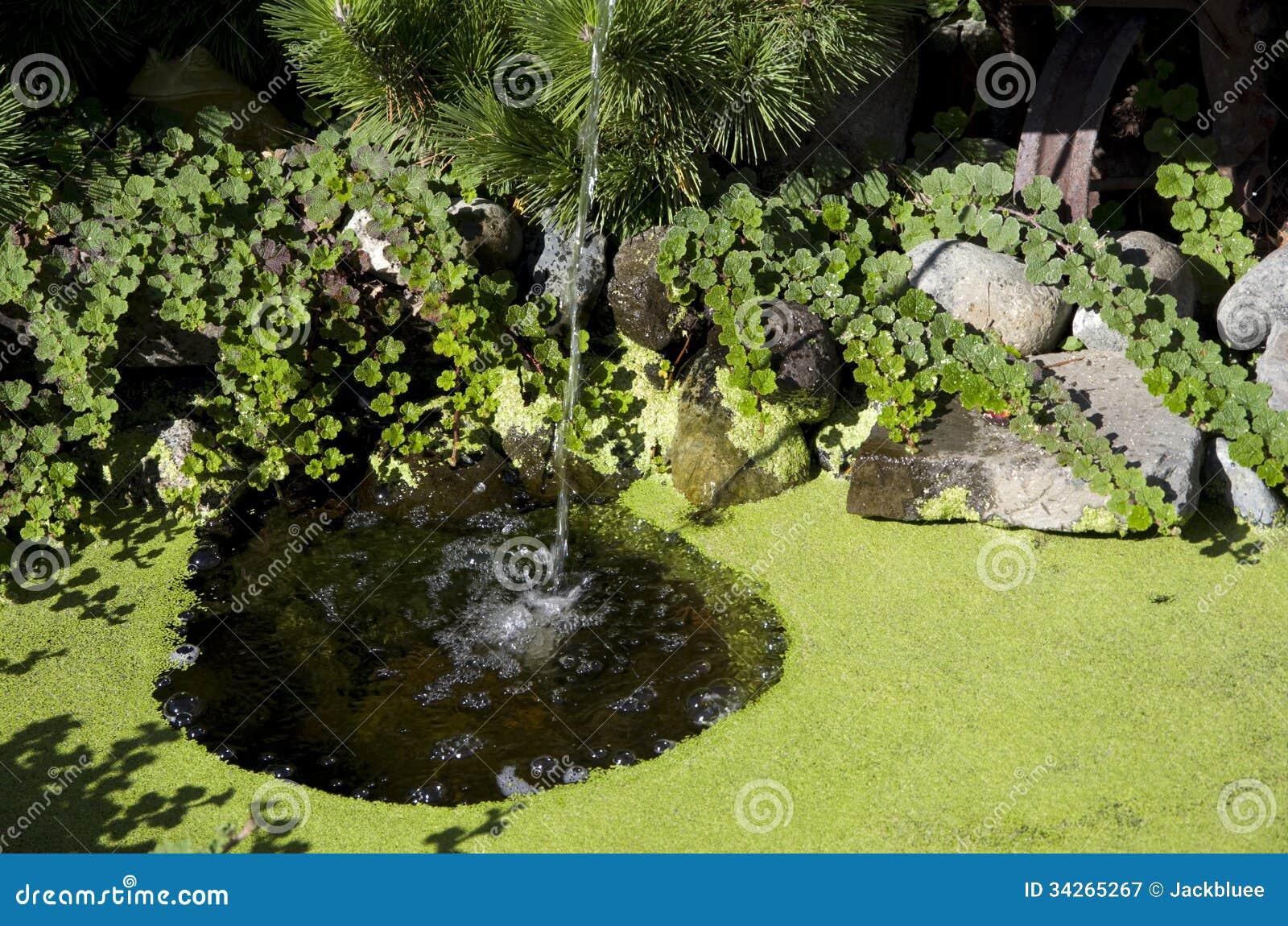 Garden stock image image of weed gardening pond for Garden pond design software free download