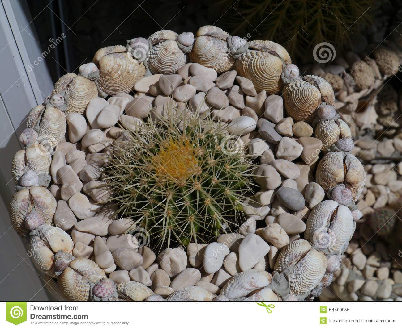 A Garden Of Shells With Cactus Plants Stock Image Image Of