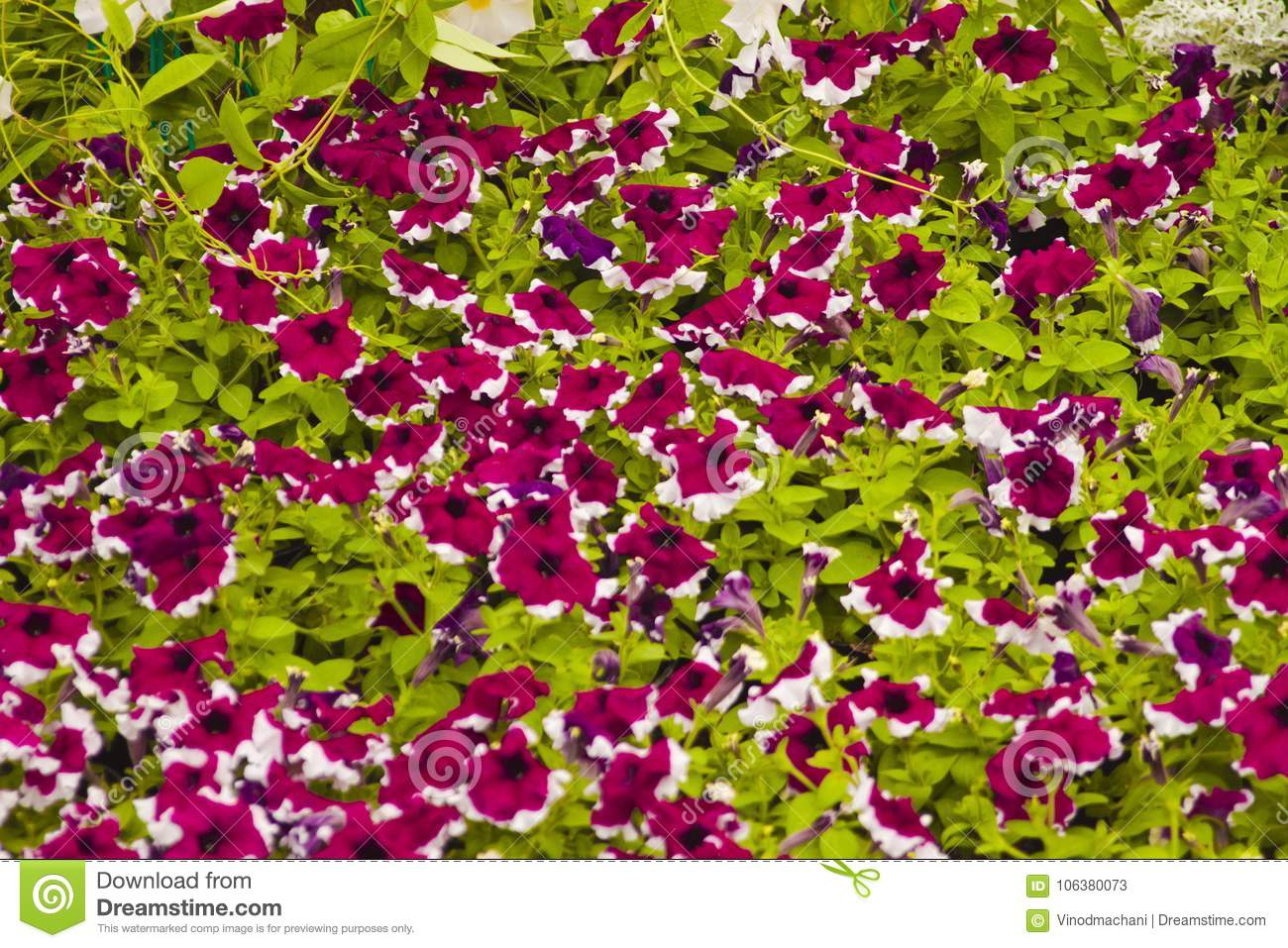 Garden Small Or Little Flowers Stock Image Image Of Bunch Black