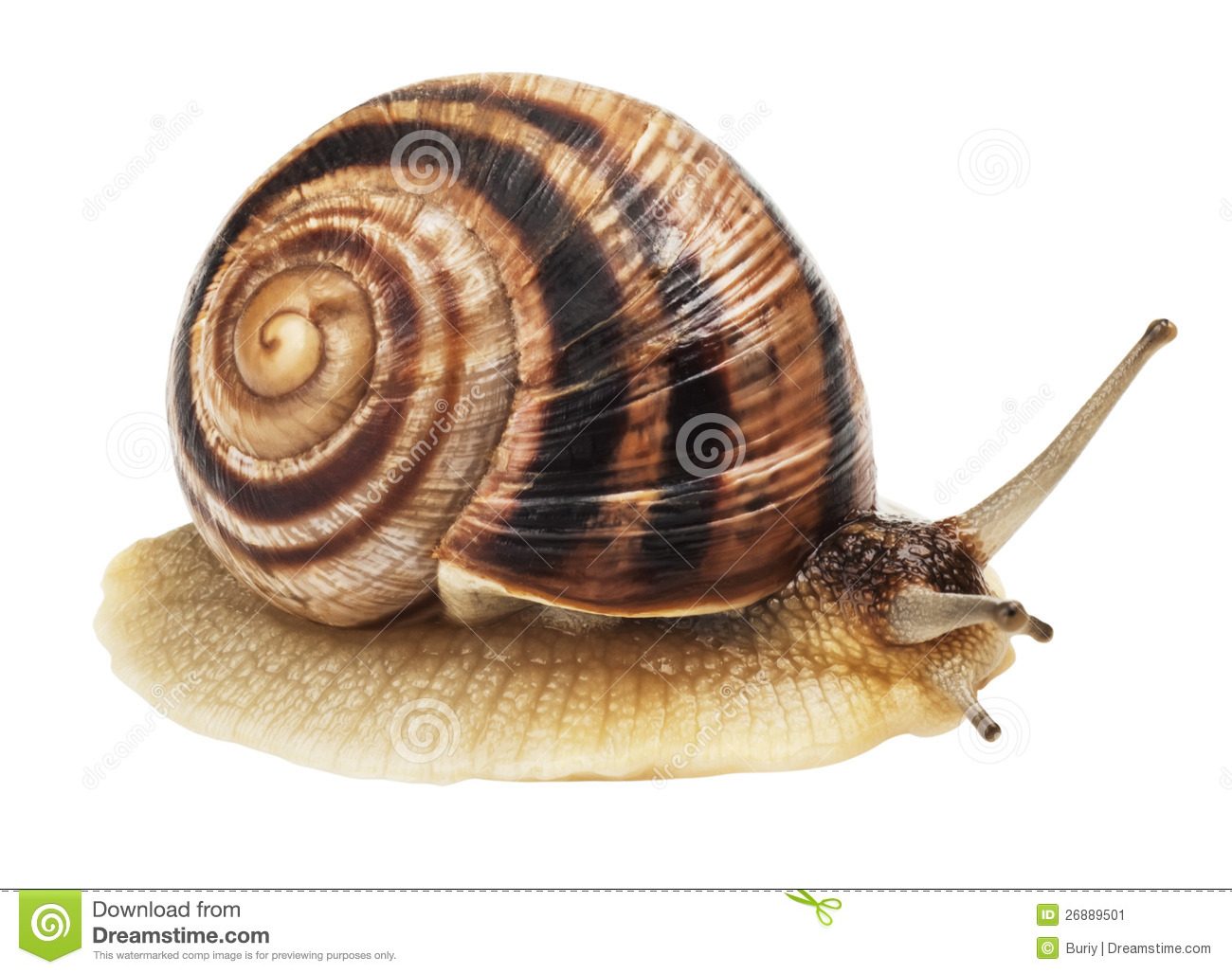 how to stop snails in the garden