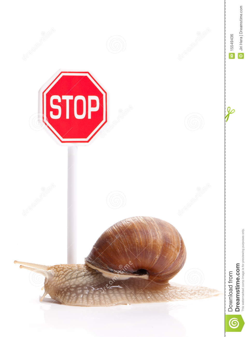 Garden Snail And Stop Traffic Sign Royalty Free Stock
