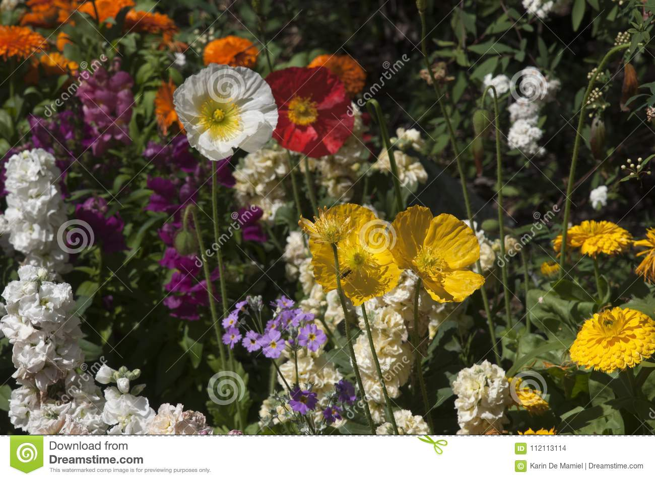 Garden Of Spring Flowers Stock Photo Image Of Flora 112113114