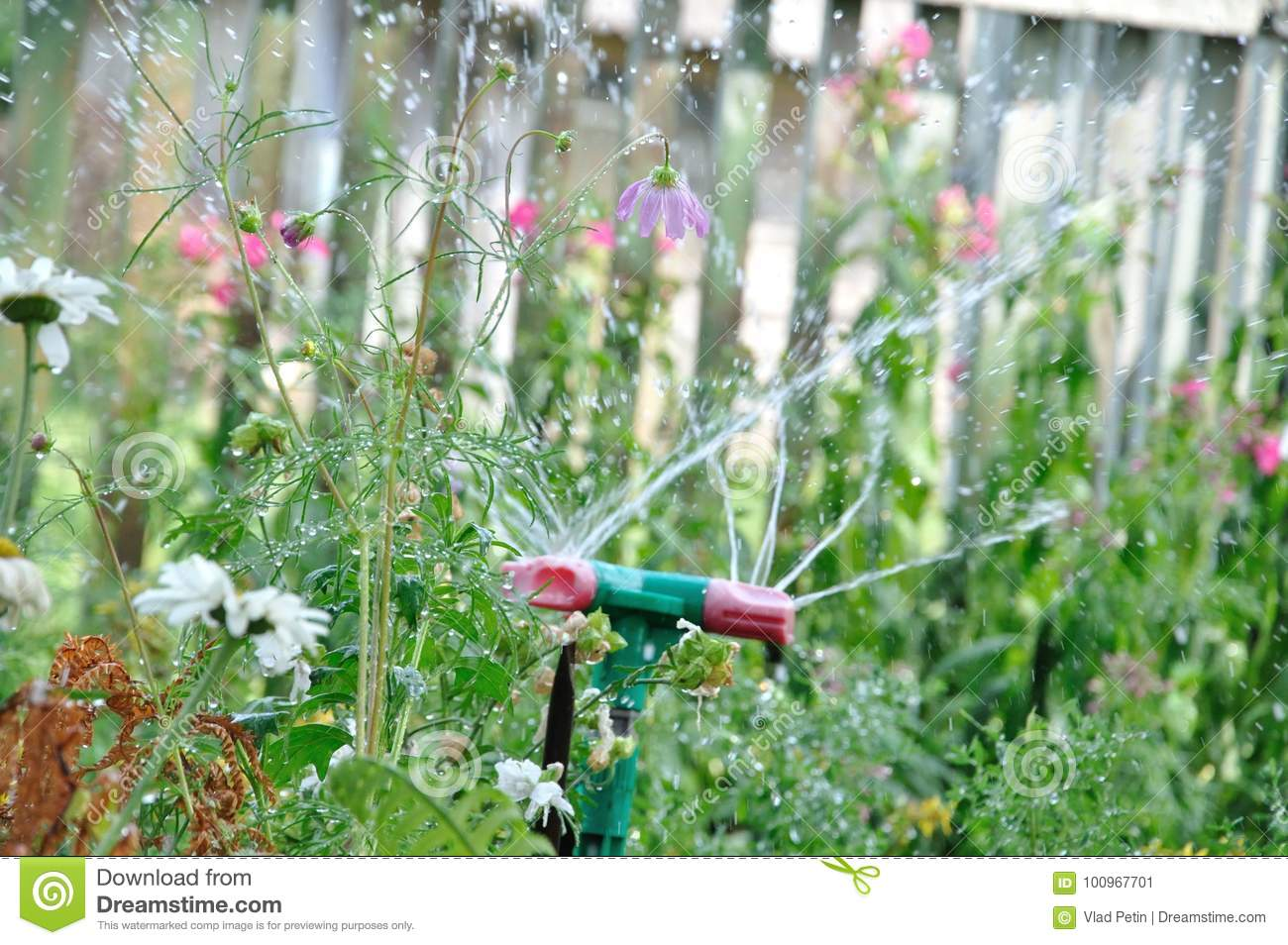 Garden sprinkler watering grass at sunny day and droplets of water