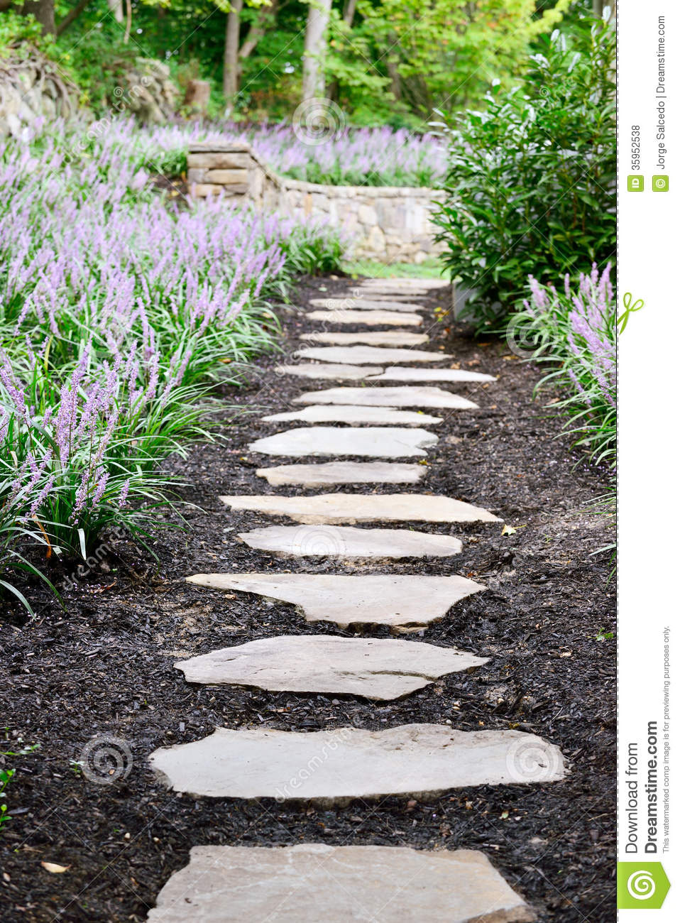 Download Garden Stone Path And Liriope Stock Photo   Image Of Flowers, Path:  35952538