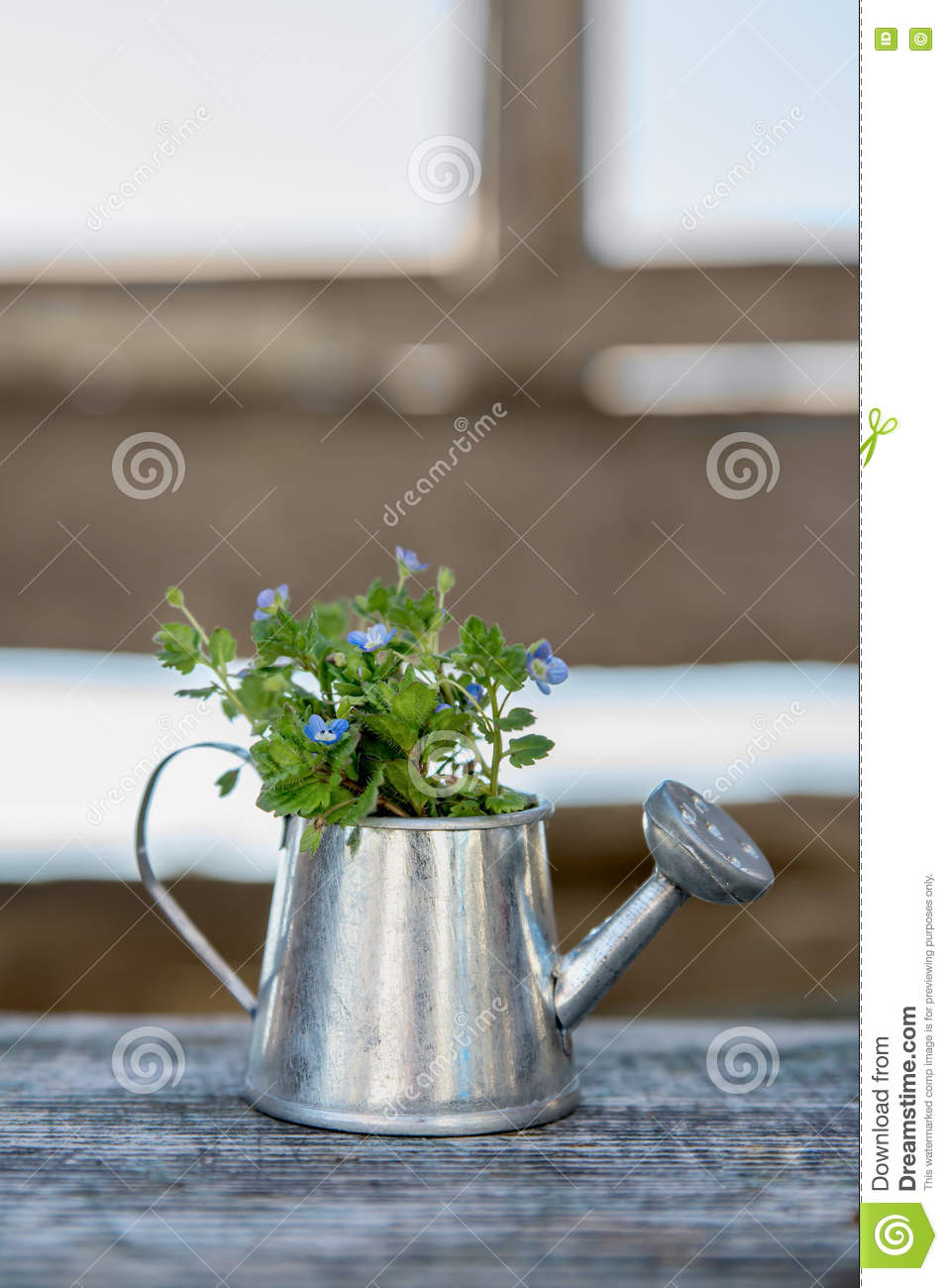 Garden tools watering can and flowers on old wooden for Gardening tools watering