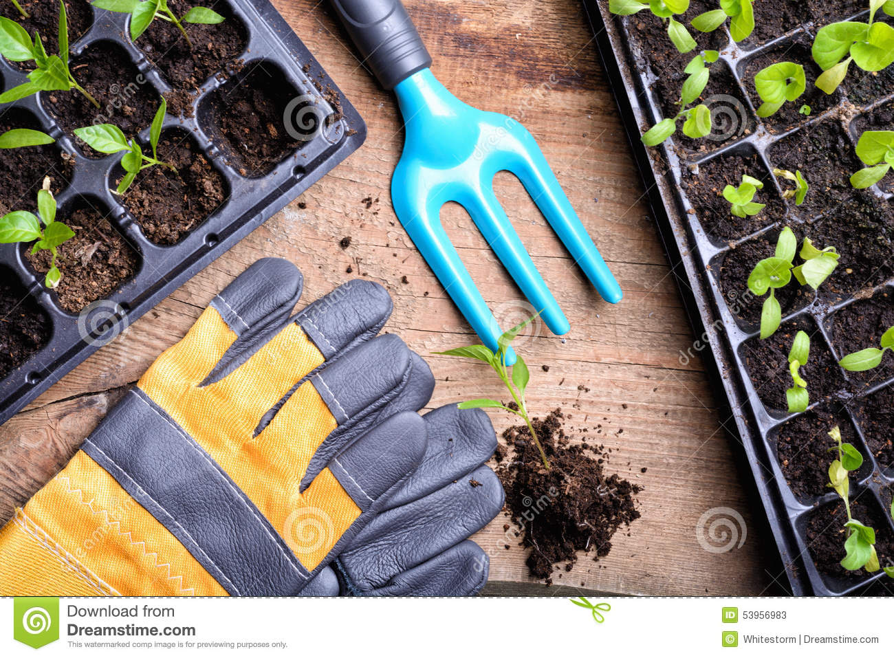 Garden tools stock photo 56980740 for Gardening tools cartoon