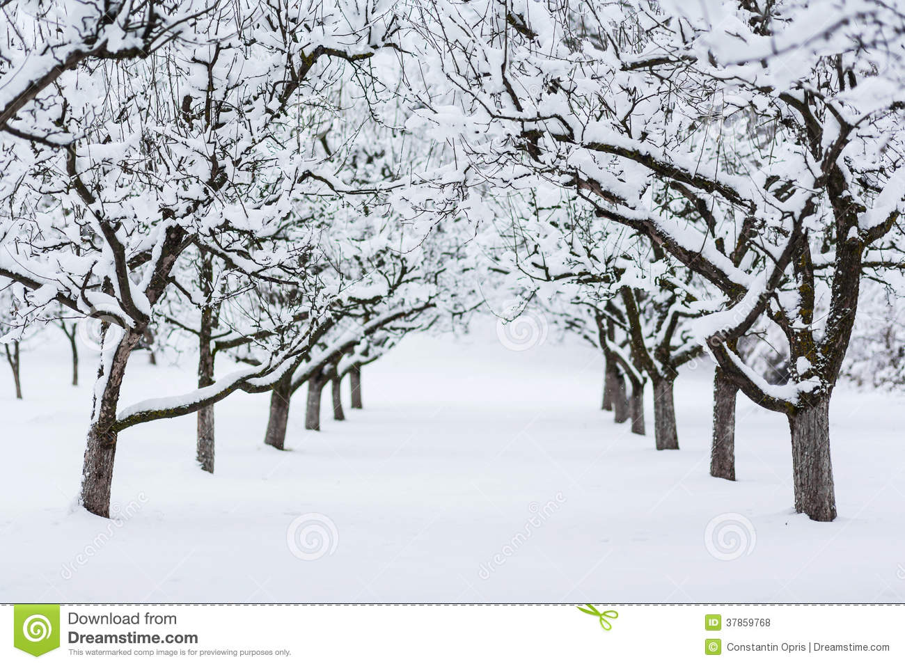 garden trees in winter stock photo image of perspective 37859768