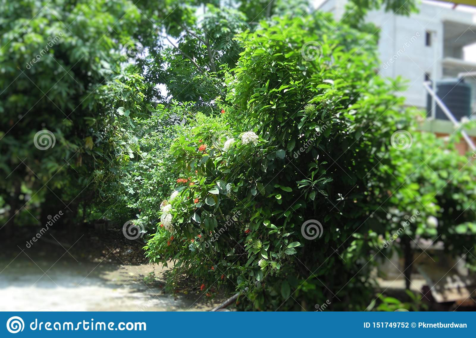 The Garden With Various Types Of Trees And Also Flowers Stock