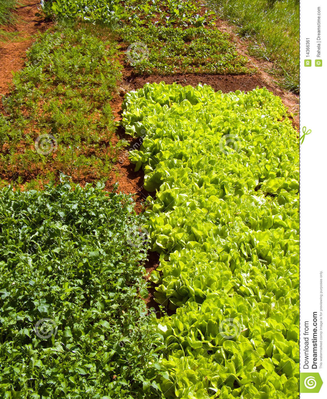 Garden vegetable patch stock image image 14366361 for Vegetable patch