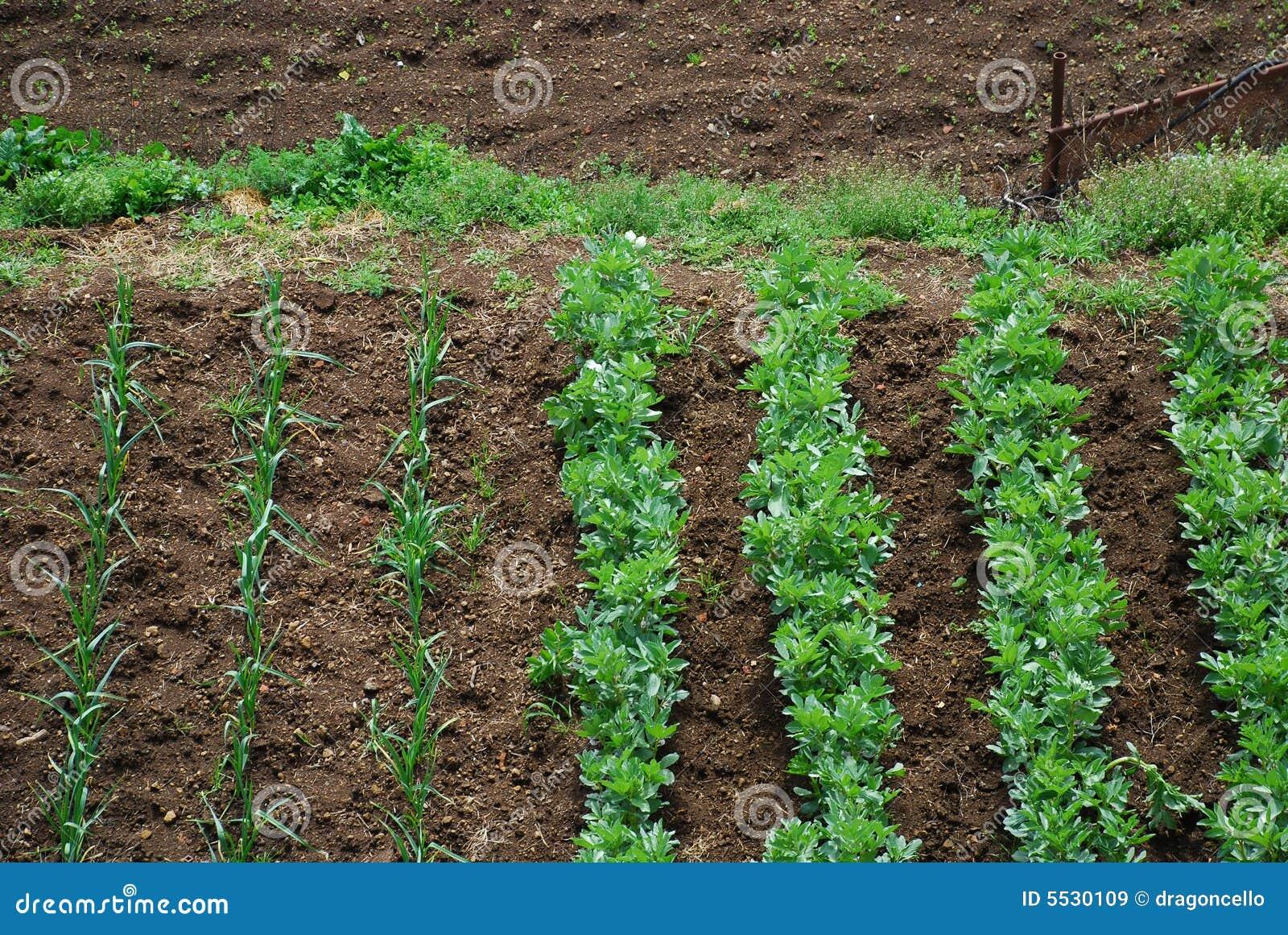 Garden vegetable plot 2 royalty free stock images image for Vegetable garden plots design