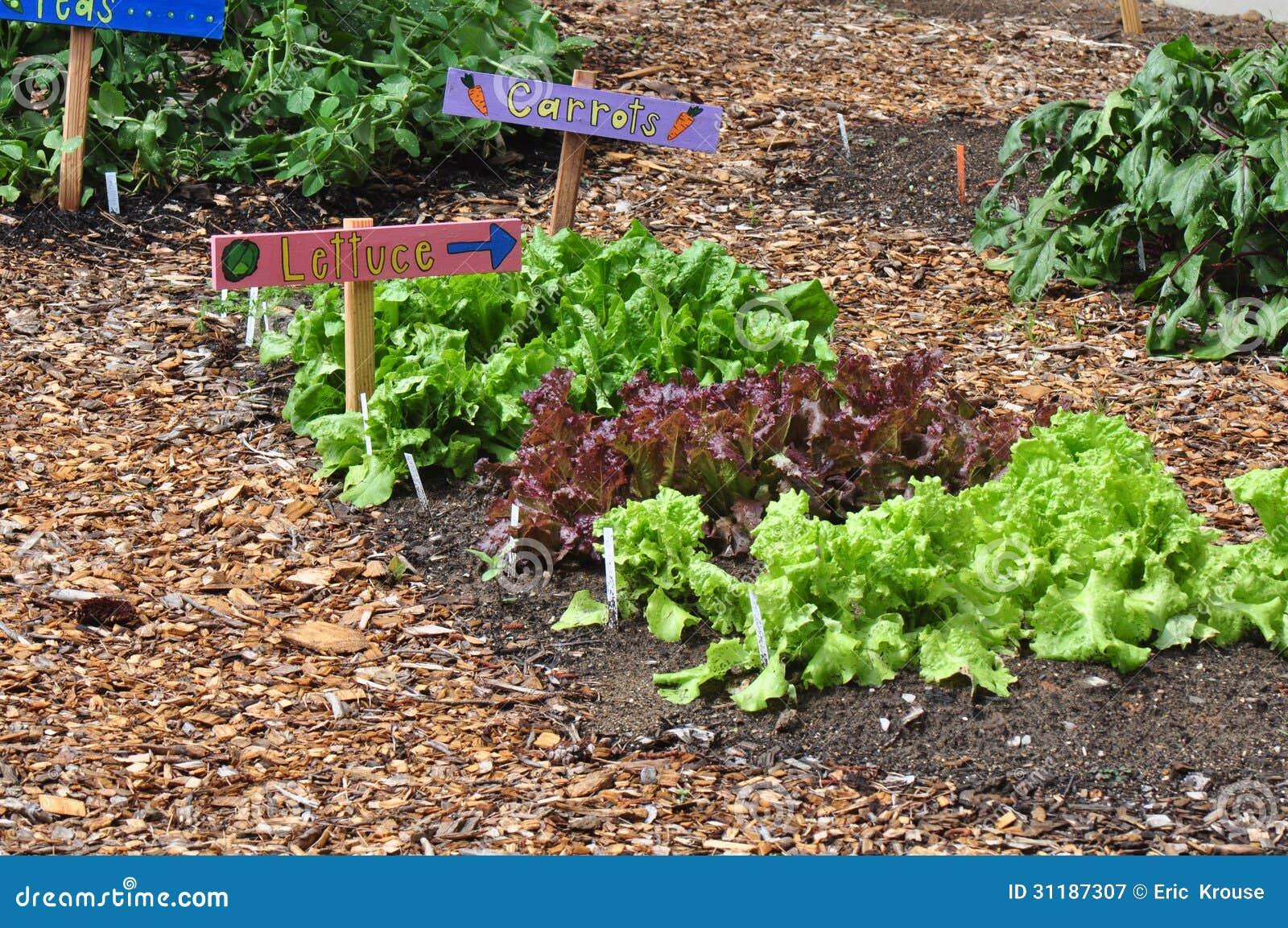 Garden vegetables royalty free stock photography image 31187307 for North carolina vegetable gardening