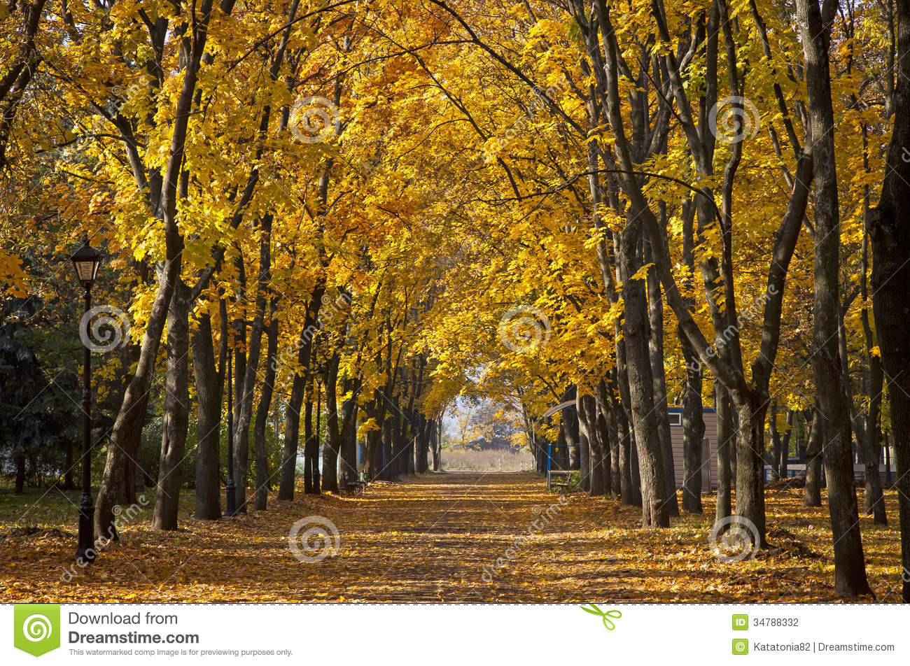 Garden Walkway With Picturesque Autumn Trees Stock Photography ...