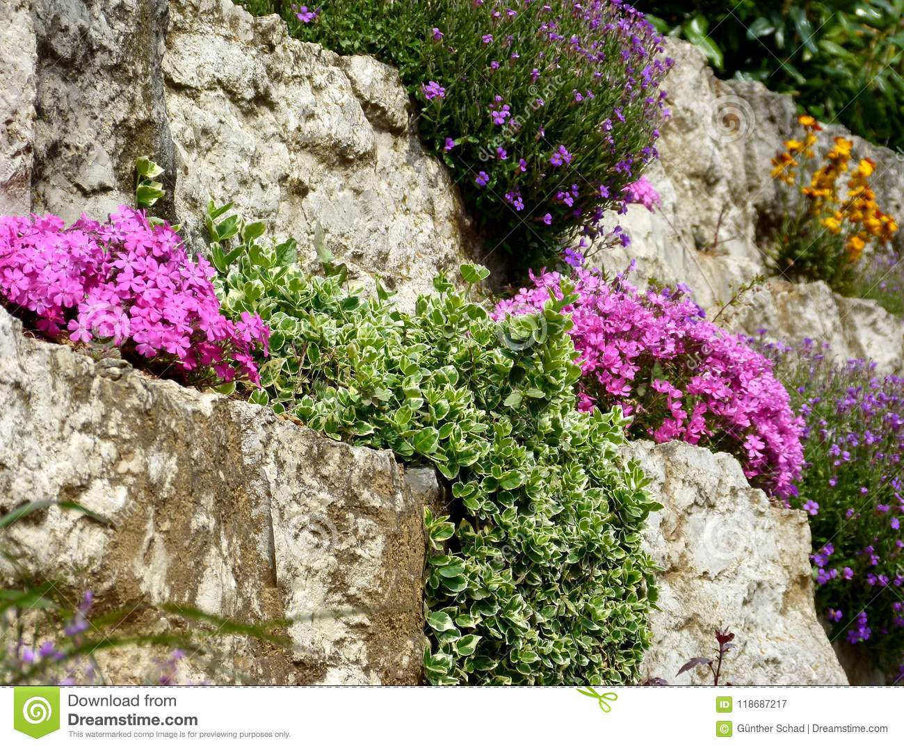 Rustic Garden Wall With Different Flowers Stock Image Image Of