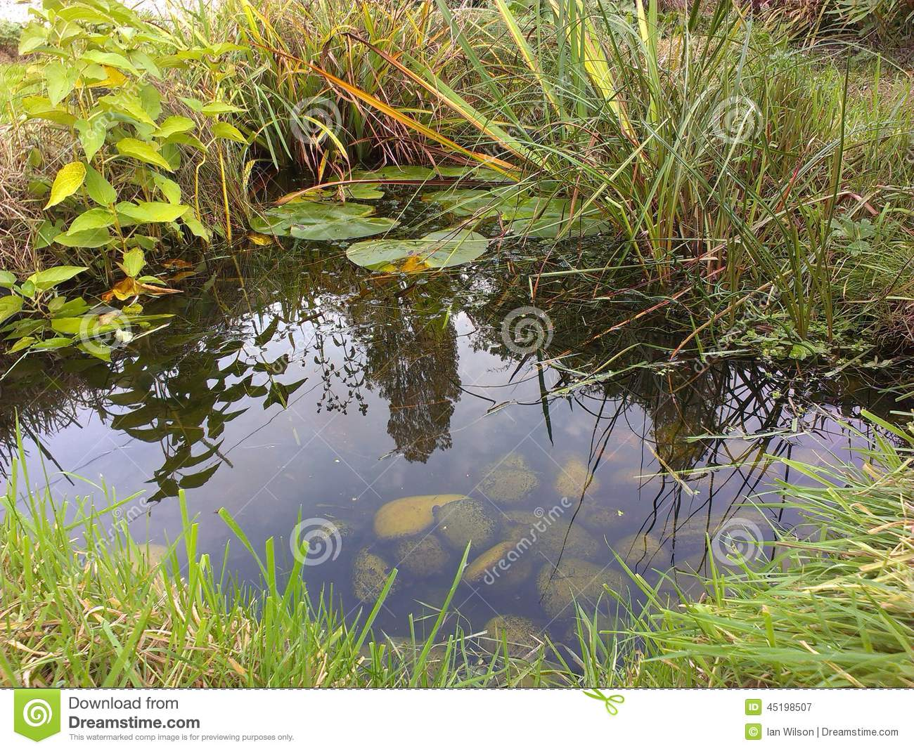 Garden Wildlife Pond Stock Image Image Of Suburban Plants 45198507