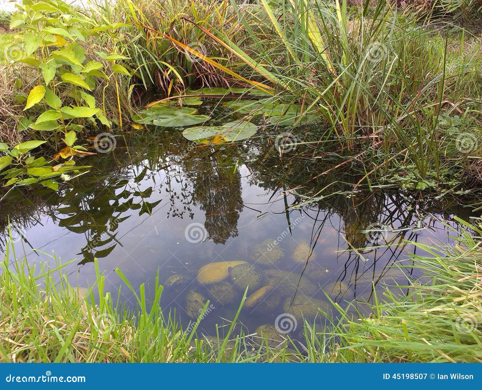 Garden wildlife pond stock photo image 45198507 for Garden pond management
