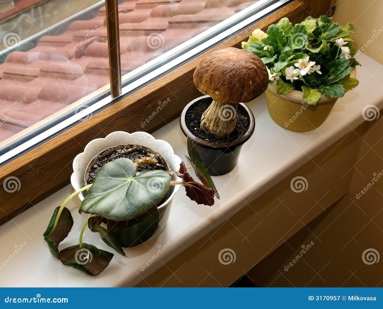 Garden on window sill