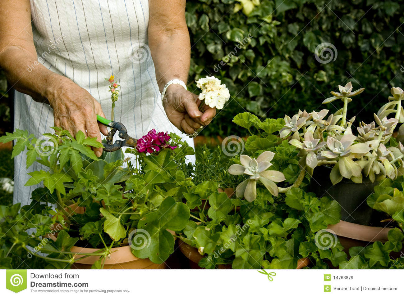Garden Work Royalty Free Stock Images Image 14763879