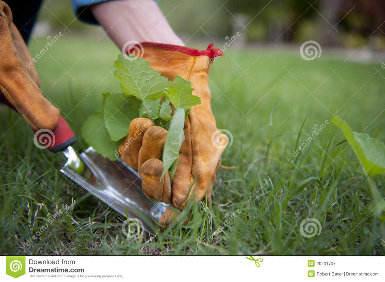 Garden Work Royalty Free Stock Photography Image 20231707
