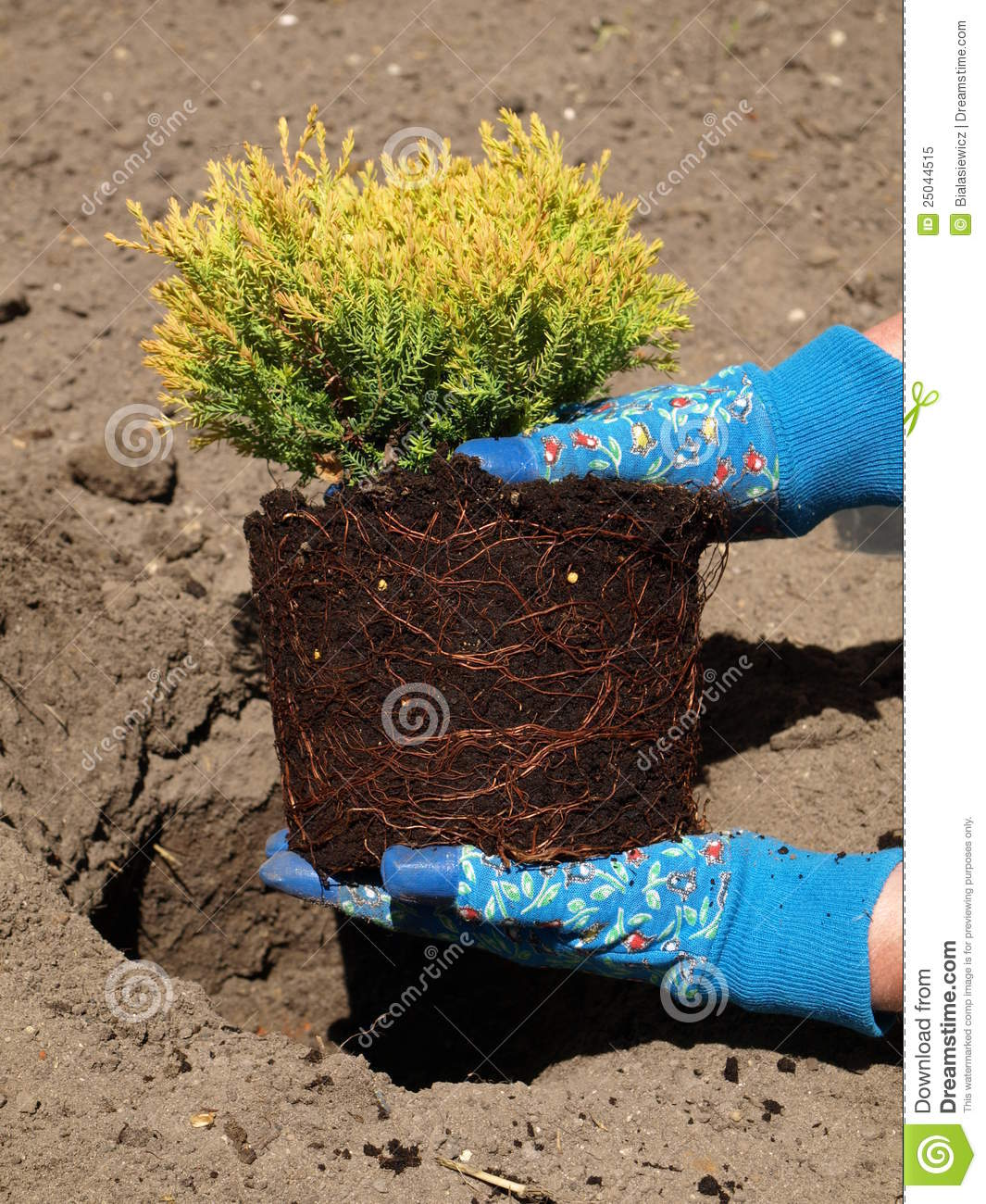 Garden Work Royalty Free Stock Photo Image 25044515