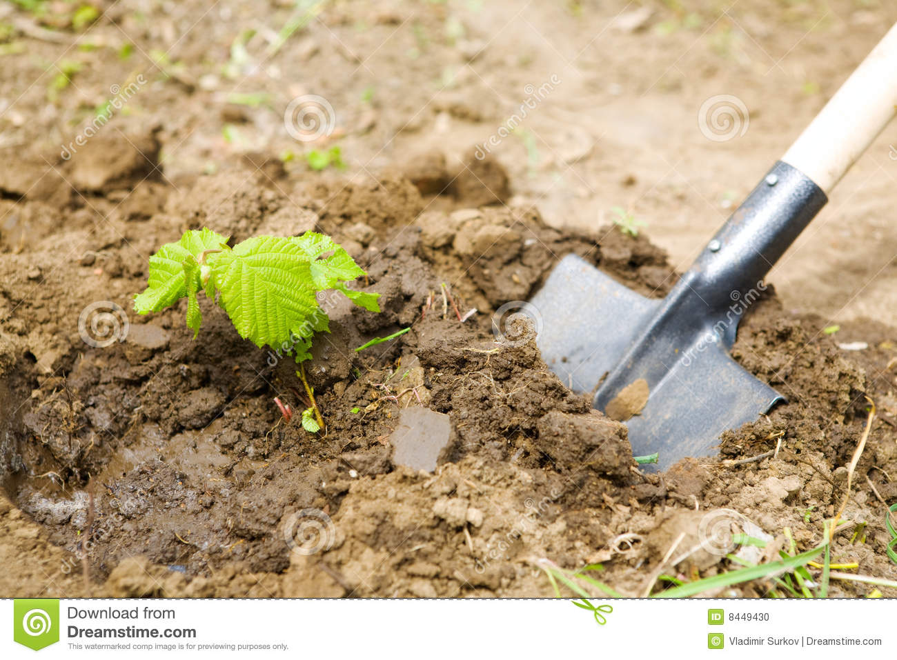 Garden Work Stock Photo Image 8449430