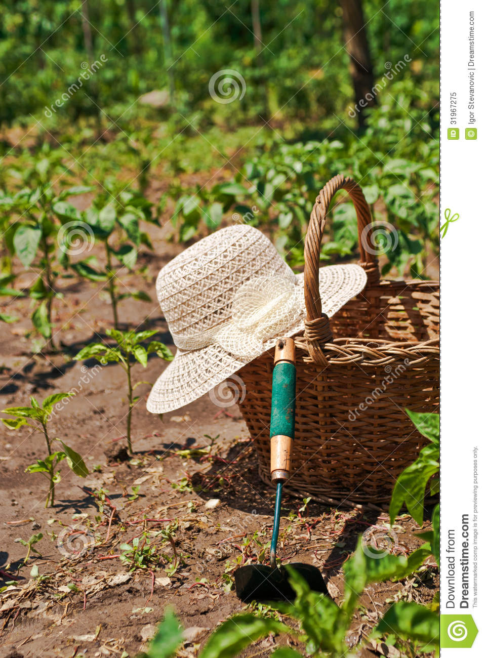 Garden Work Royalty Free Stock Photo Image 31967275