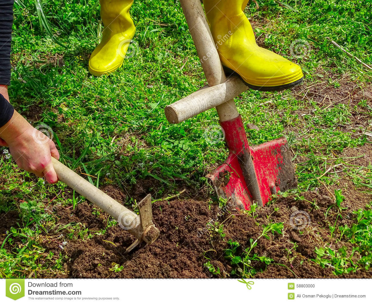 Garden Work Stock Photo Image 58803000