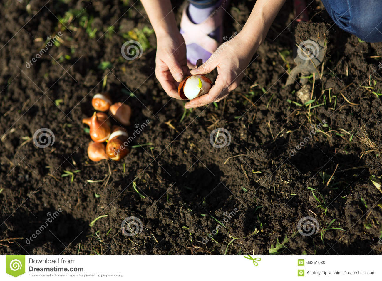 Garden Works. Young Woman Working In The Garden. Healthy Lifesty ...