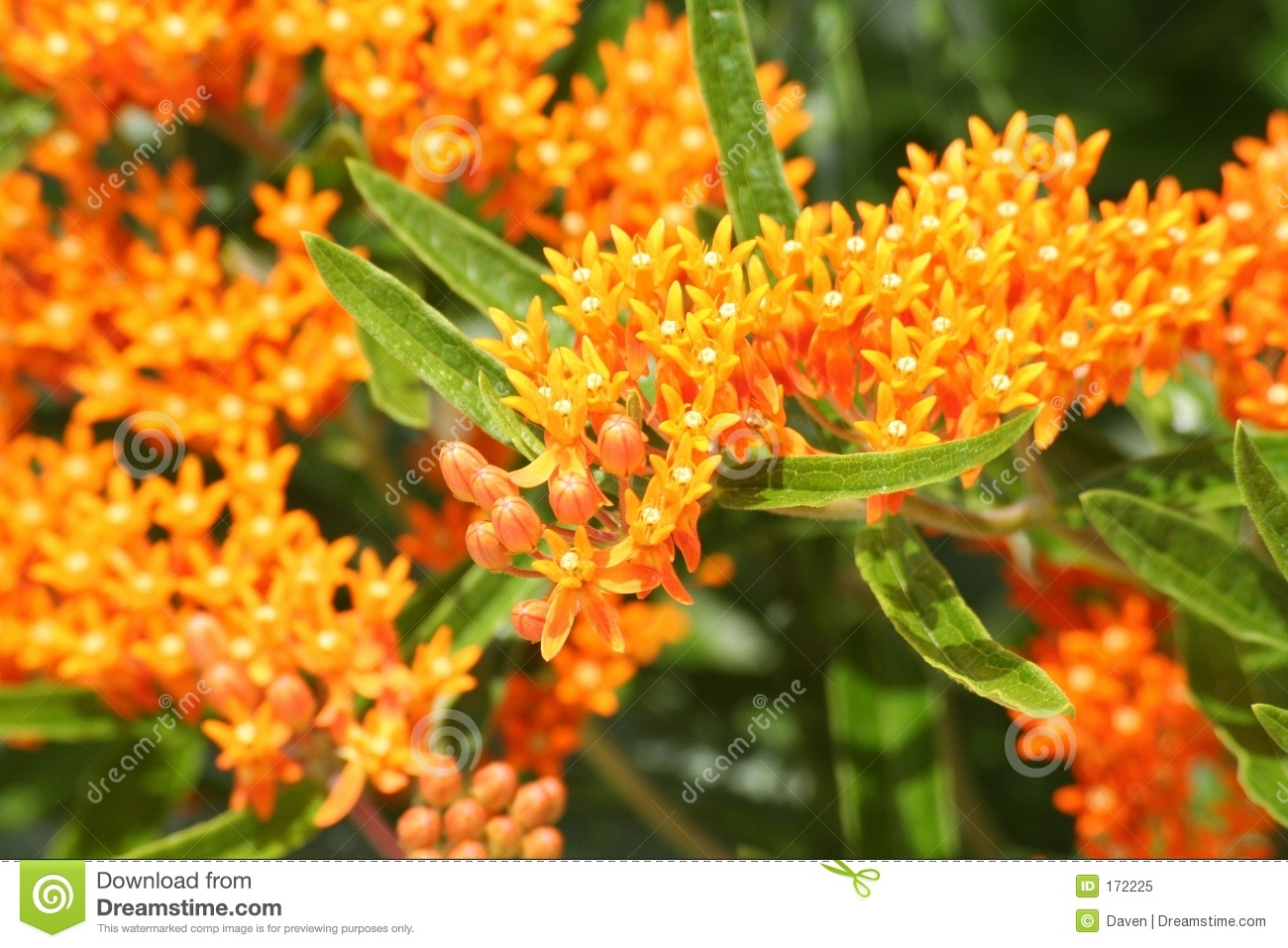 Download Garden5 stock image. Image of flower, environment, agriculture - 172225