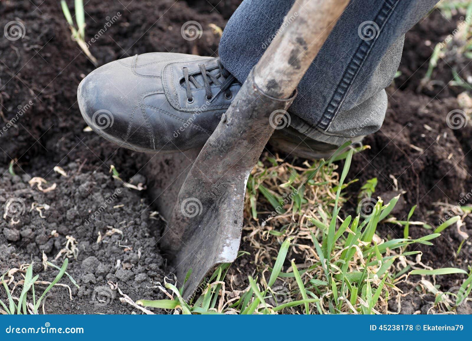 Gardener digging with spade in garden