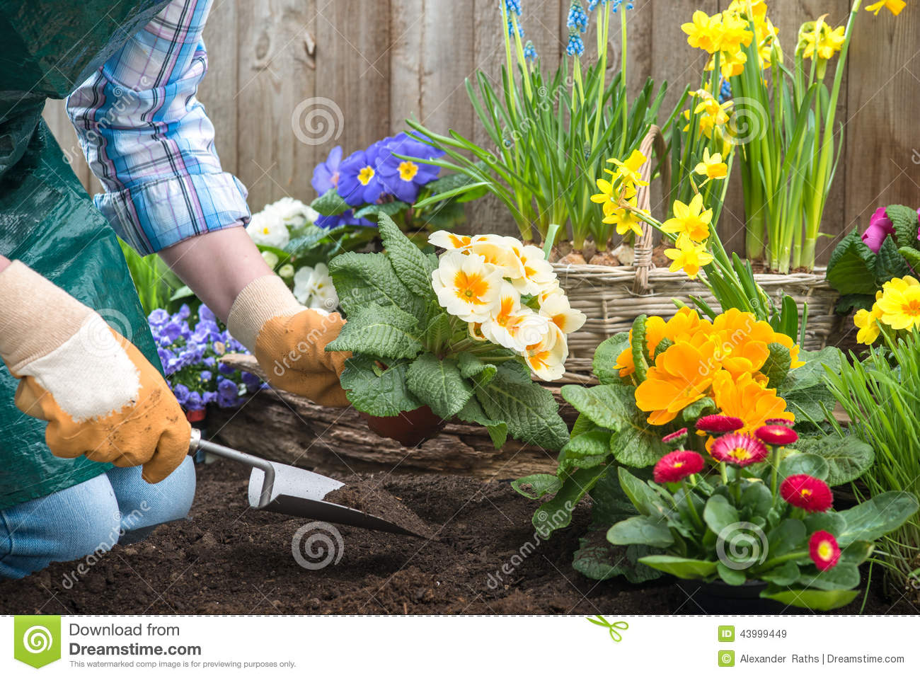 http://thumbs.dreamstime.com/z/gardener-planting-flowers-gardeners-hands-pot-dirt-soil-back-yard-43999449.jpg
