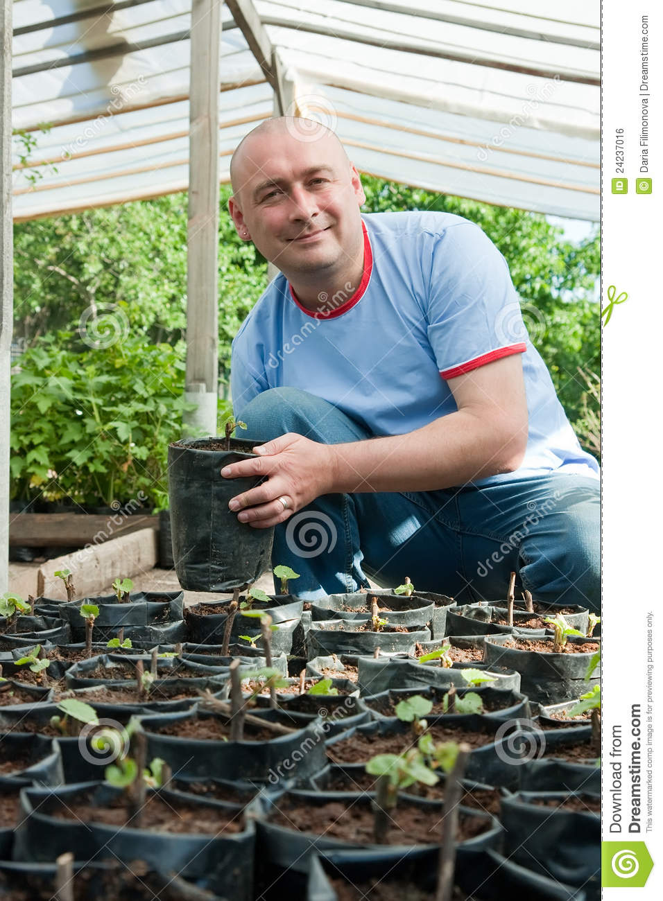 Gardener with seedlings
