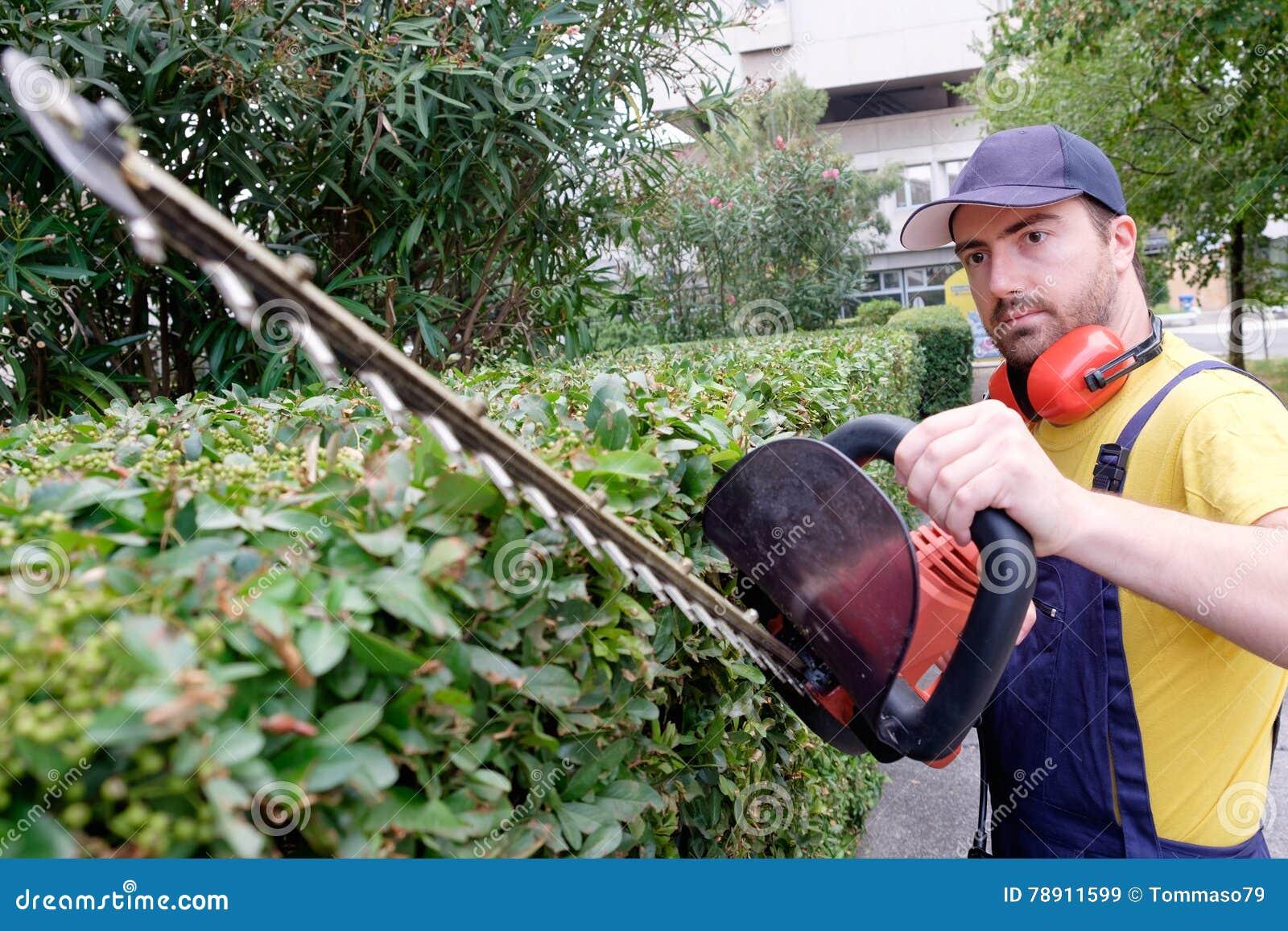 Gardener using an hedge clipper