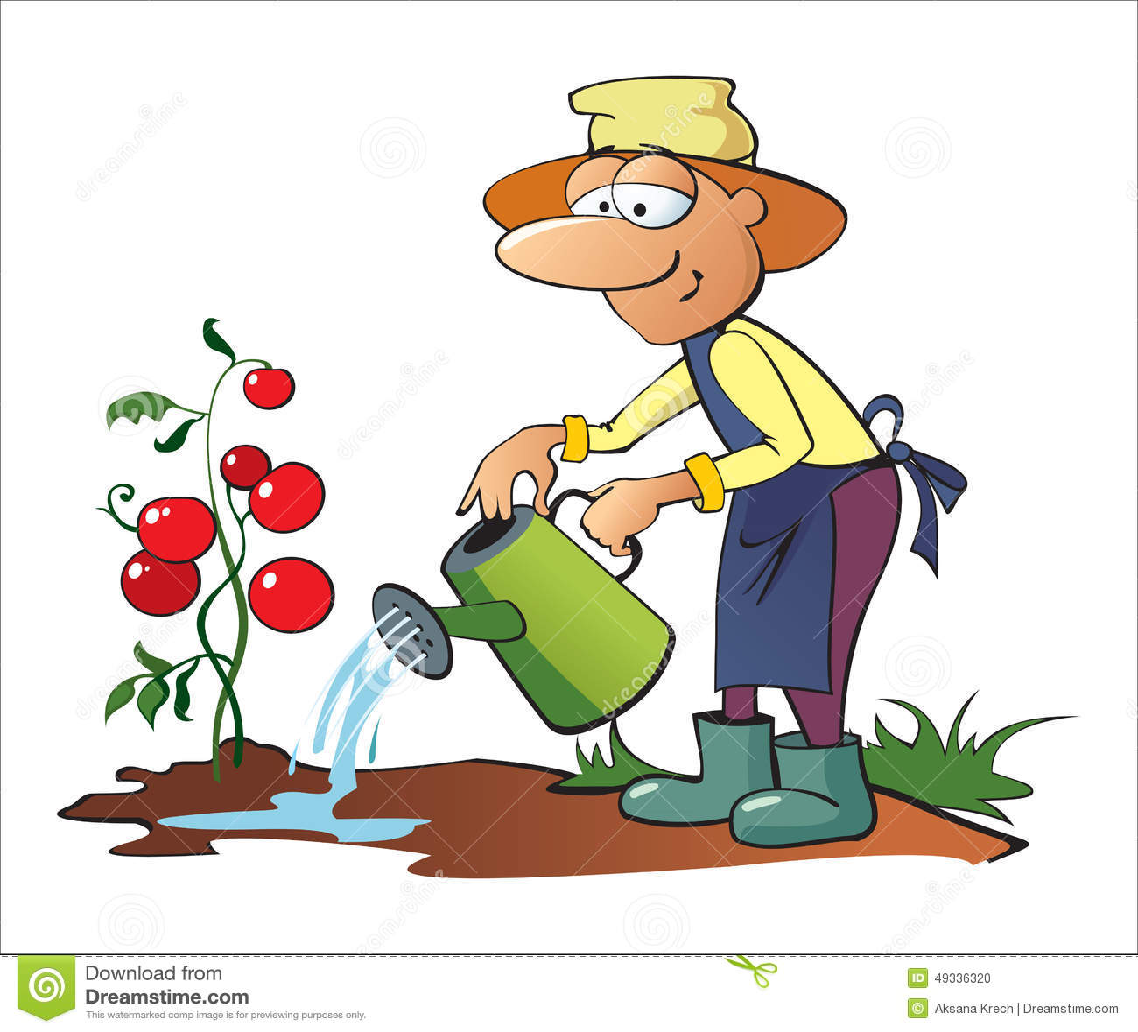 Gardener Watering Tomatoes Stock Vector - Image: 49336320